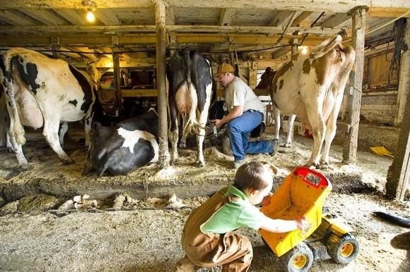 美国佛蒙特州家庭牧场处境仍然困难-国际奶业-荷斯坦